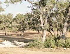 A view of some of the landscape in Reunion Ranch Austin-Dripping Springs.