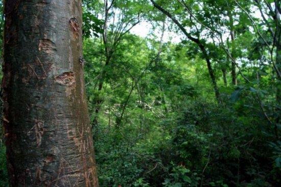 Virgin Jungle Lot