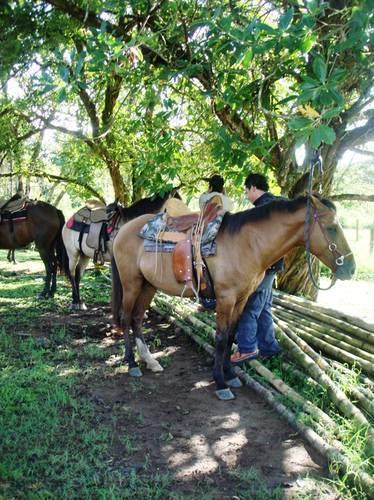 Boquete Horseback riding