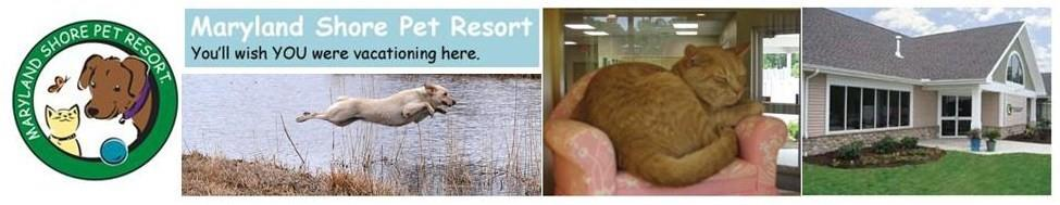 Maryland Shore Pet Resort