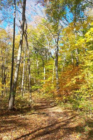 Trails to walk in Pond Mills