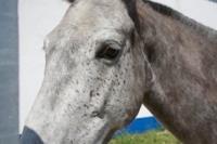 Cavalos na Areia Comporta Portugal in Alentejo
