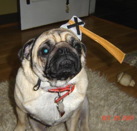 Sarah Cameron's dog - Fergy