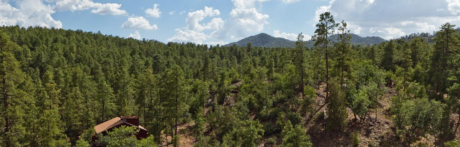Homes For Sale in The Tall Pines Prescott Arizona