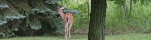 Wildlife in Sugar Springs, MI