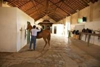 Mestre Jose Ribeira saddling his horse in Comporta