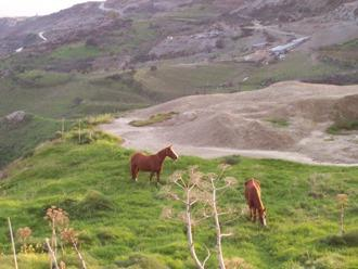 Horses grazing on top of a hill in Marathounda Paphos