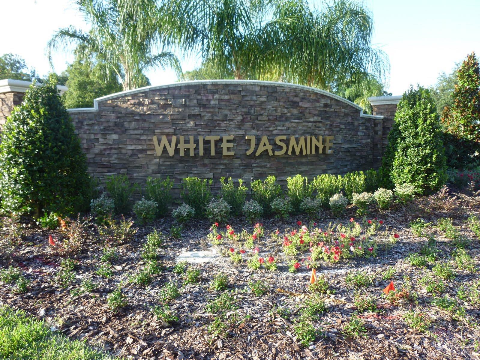 White Jasmine Apopka FL