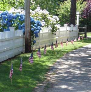 Hydrangias on the fence