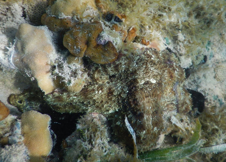 Octopus - Riu Club Negril, Jamaica