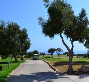 Olive trees on Cyprus golf course
