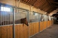 Horse Riding Comporta Alentejo