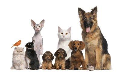 Lehigh Valley Vets, Kennels, Shelters