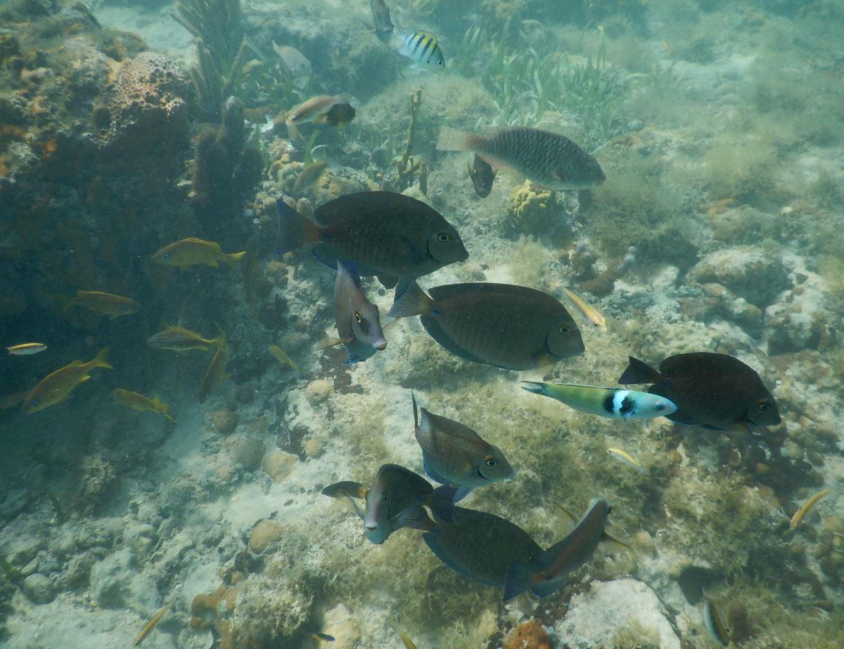 Numerous Tropical Fish - Riu Club Negril, Jamaica