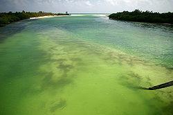 Sian Ka'an biosphere reserve.jpg