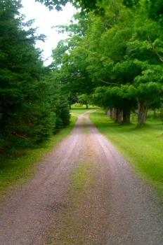 Country Manor's Tree Lined Lane