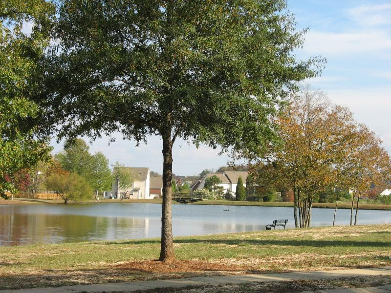 Brandon Oaks Pond