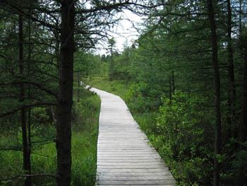 Sifton Bog in London Ontario
