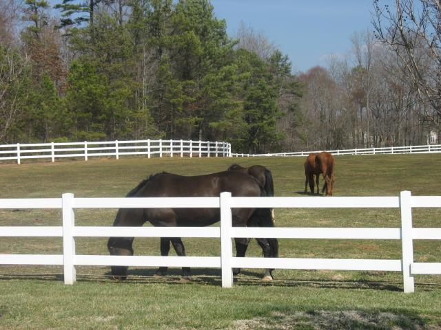 Union County NC Horse Farm