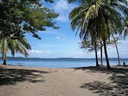 Playa Panama Palm Trees