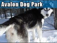 Avalon Saskatoon Neighbourhood Dog Park