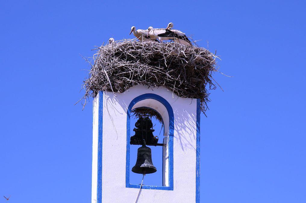 Storks Comporta