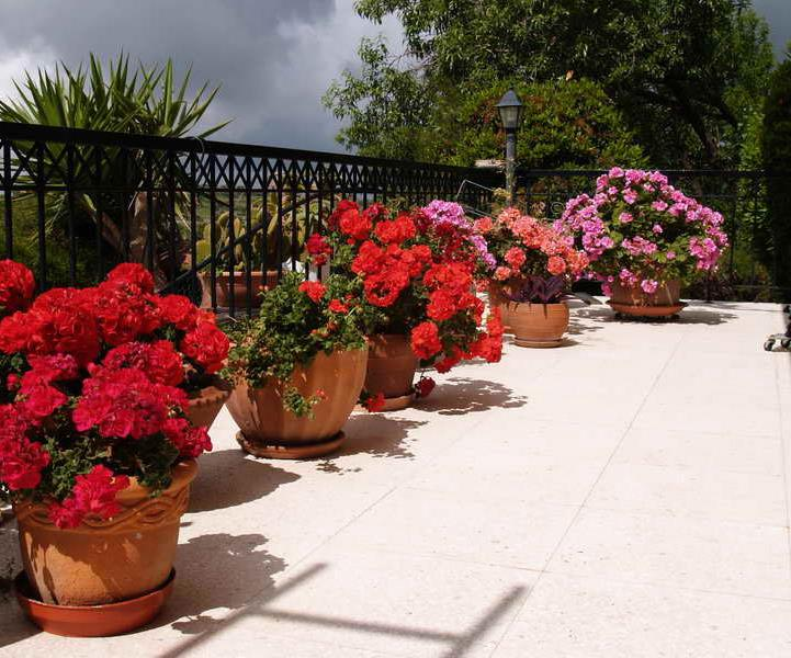flower in pots in Cyprus villa for sale