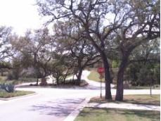 Lovely and stately oaks adorn the main roads through Highpointe Austin.
