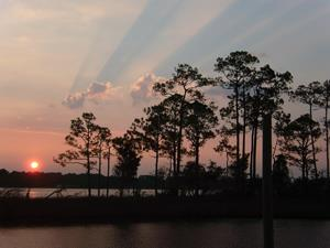 Amazing South Carolina Lowcountry Beauty