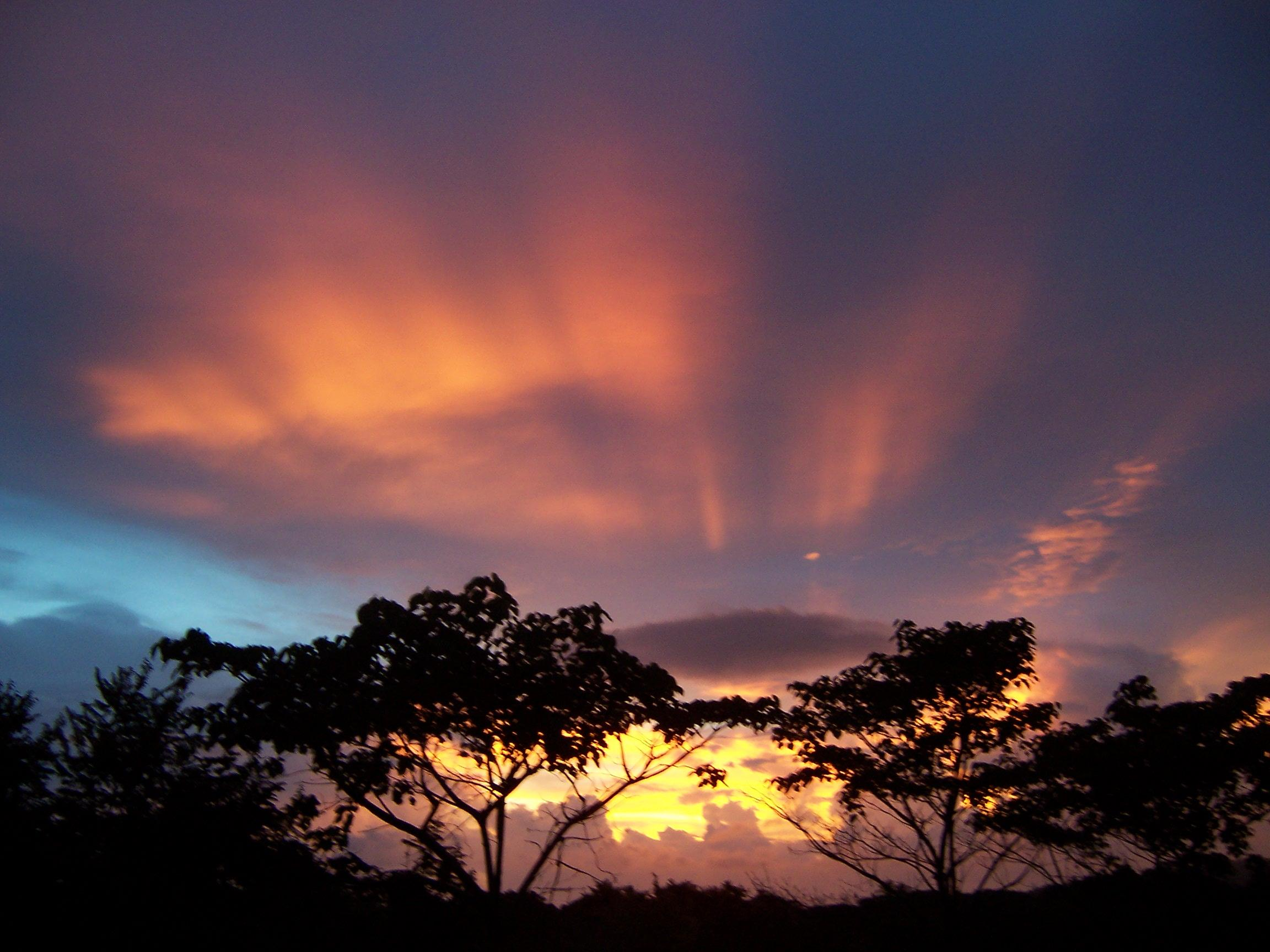 Guanacaste trees and amazing sunset in Guanacaste Costa Rica