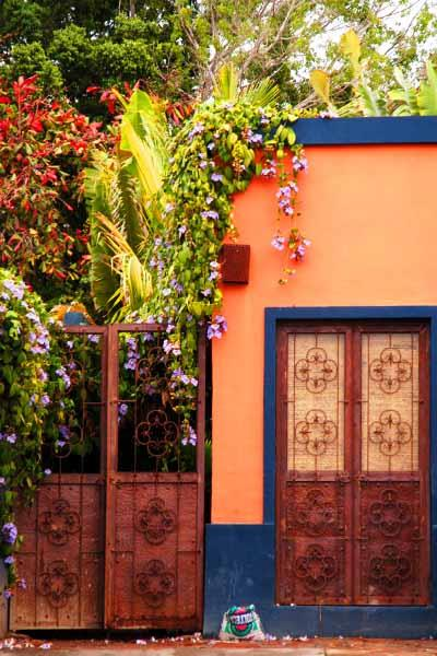 Color of Life in Mexico