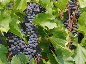West Michigan Wine Tour