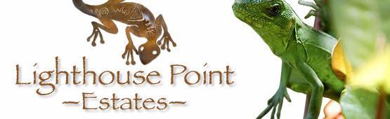 LIghthouse Point Estates Wildlife
