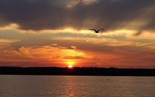Oakville Sunsets