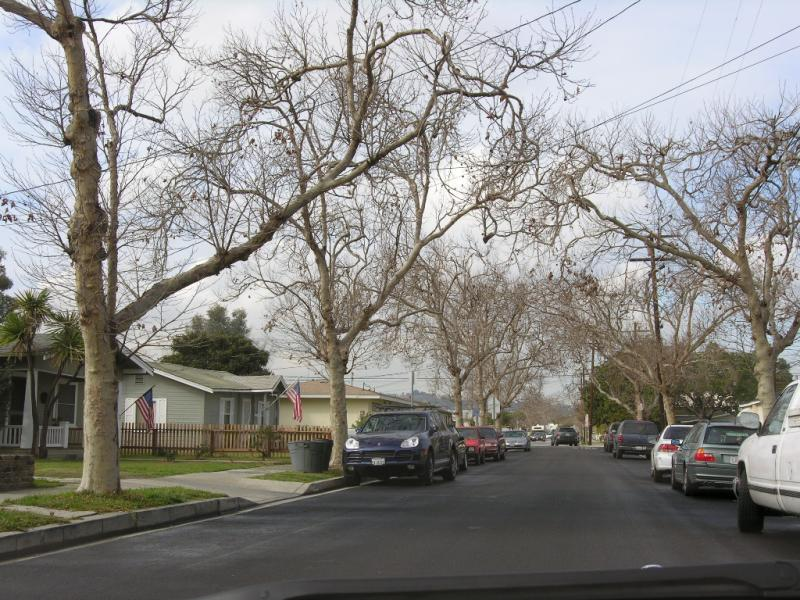 Lomita Tree Lined Street