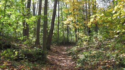 Trails in Warbler Woods