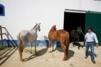 Comporta Horse Stables Alentejo Portugal