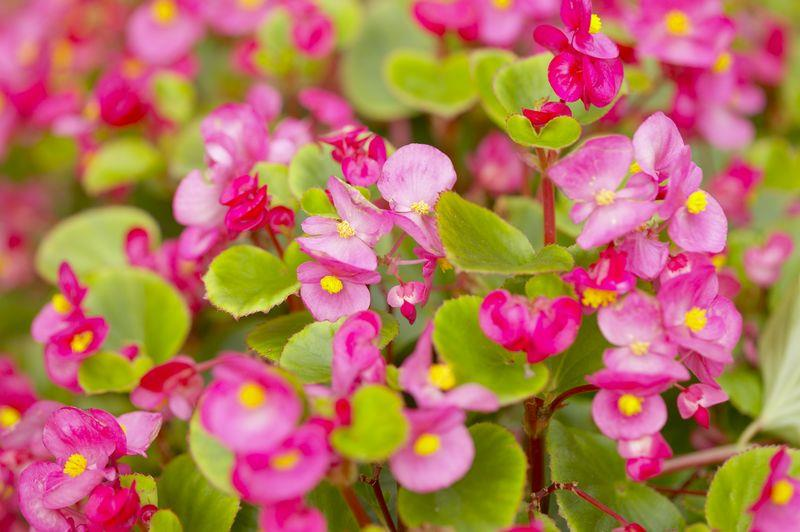 Add flowers when selling a Massachusetts home