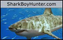 Shark Boy