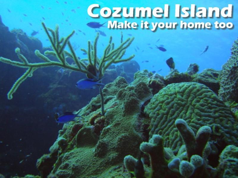 Cozumel diving