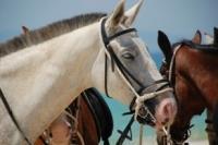 Cavalos na Areia Comporta Portugal