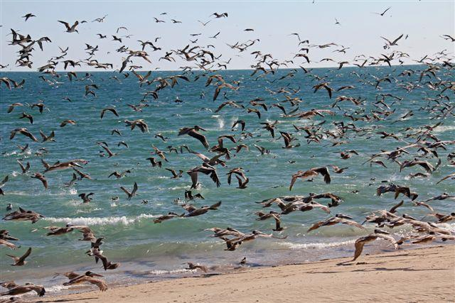 1-_Birds_Flying.jpg