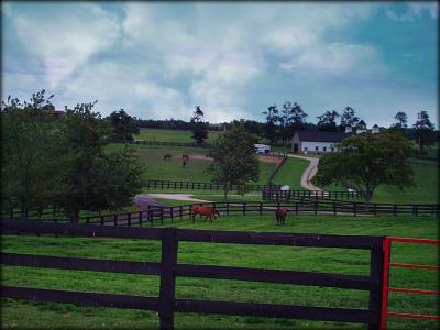 Kentucky horse farm by Lizette Fitzpatrick - Lizette Realty