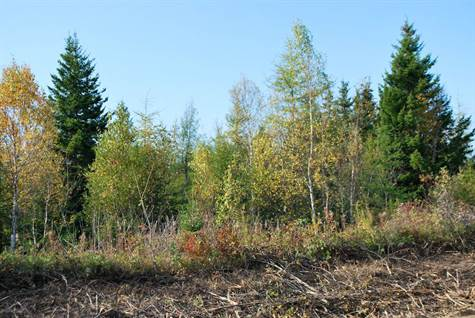 42 Acres Wood Point 001