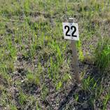 Lots and Land for Sale in Gold Coast Properties, Ninette, Manitoba $22,500