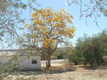 Lots and Land for Sale in Las Cuevas, Baja California Sur $95,000