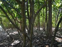 Lots and Land for Sale in Nosara, Guanacaste $59,000