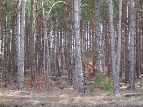 heavily wooded bulding site