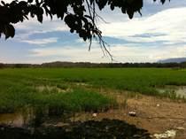 Farms and Acreages for Sale in Palmar Norte, Aguas Zarcas, Puntarenas $1,200,000