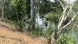 Lots and Land for Sale in Blackman Eddy, Cayo District, Cayo $110,000